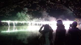 八鶴湖桜祭り花火